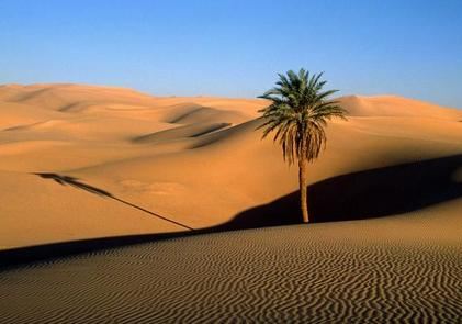 An oasis in the Sahara desert